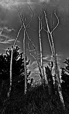 Light Photograph - Naked Trees by Nadya Ost