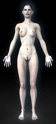 Naked Woman Print by Christian Darkin