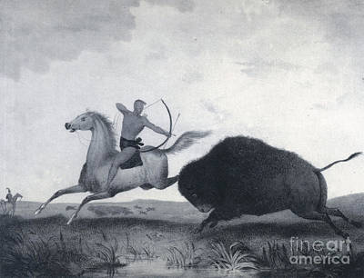 Bison Charge Photograph - Native American Indian Buffalo Hunting by Photo Researchers