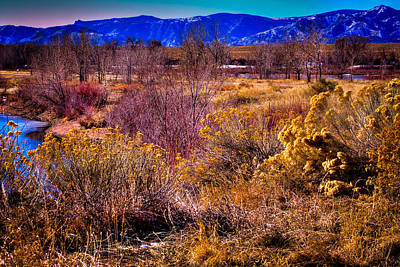Nature At It's Best In South Platte Park Print by David Patterson