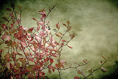 Salmon Mixed Media - Nature On Parade by Bonnie Bruno