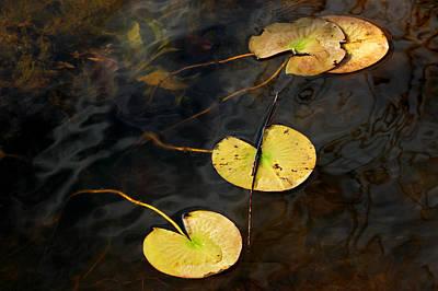 Natures Lily Pad Garden Print by LeeAnn McLaneGoetz McLaneGoetzStudioLLCcom