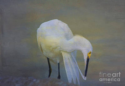 Egret Mixed Media - Natures Wildlife Beauty by Deborah Benoit