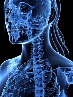 X-ray Image Digital Art - Neck Bones, Artwork by Sciepro