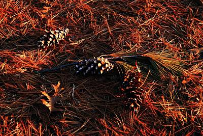 Needles Cones And Oak Leaf Print by Larry Ricker