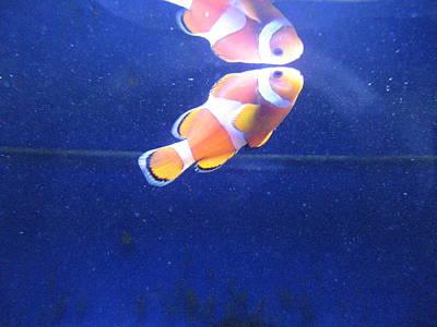 Nemo Print by Davor Sintic