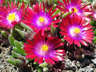 Flower Photograph - Neon Glow by Robert Meyers-Lussier