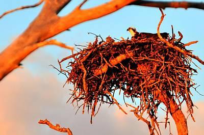 Nest Print by Barry R Jones Jr