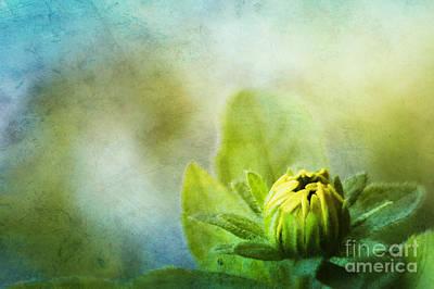 New Beginnings Print by Darren Fisher