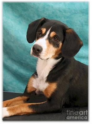 New Breed Entlebucher Pup Print by Maxine Bochnia