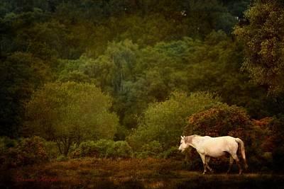 Livestock Digital Art - New Forest Walk by Dorota Kudyba