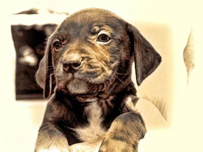 Lab Digital Art - New Puppy by Christy Leigh