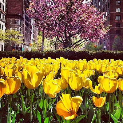 Tulips Photograph - New York City In The Spring by Vivienne Gucwa