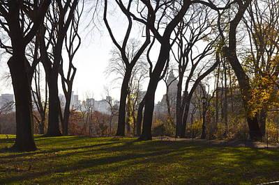 New York Trees Print by Snow  White
