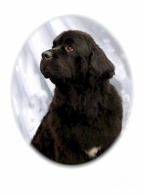 Newfie Digital Art - Newfoundland 17 by Larry Matthews