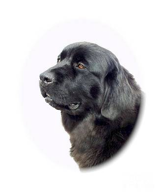 Newfie Digital Art - Newfoundland 890 by Larry Matthews