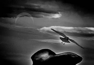 Birds In Flight At Night Photograph - Night Flight by Rick Nye