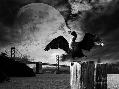 Night Of The Cormorant . Black And White Print by Wingsdomain Art and Photography