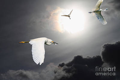 Egrets Photograph - Night Of The White Egrets by Wingsdomain Art and Photography
