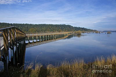 Yellow Photograph - Nisqually Boardwalk by Sean Griffin