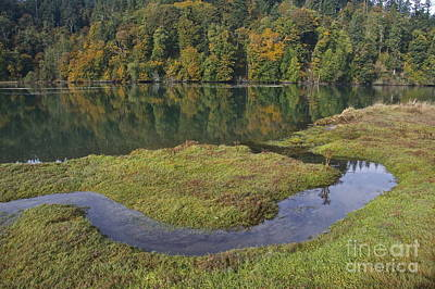 Yellow Photograph - Nisqually Estuary by Sean Griffin