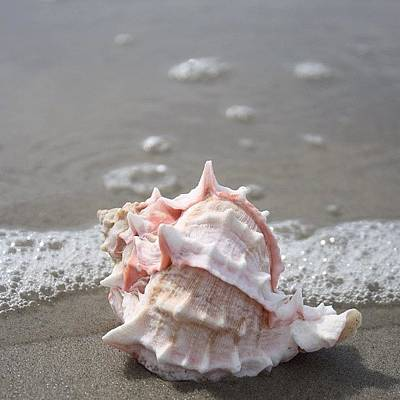 Magician Photograph - #noedit #nofilter #seashell #conch by Emily Lippman