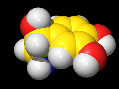 Noradrenaline Molecule Print by Dr Tim Evans