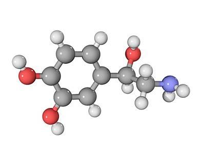 Norepinephrine Neurotransmitter Molecule Print by Laguna Design