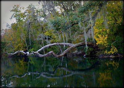 North Florida River Reflections Print by Carla Parris