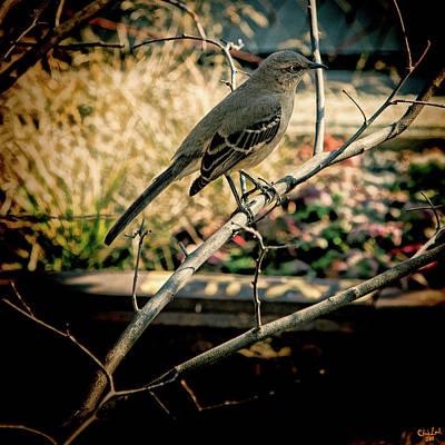 Mockingbird Digital Art - Northern Mockingbird On The Highline by Chris Lord