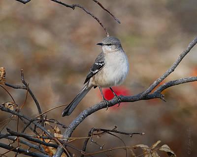 Mockingbird Digital Art - Nosy Noisy Mockingbird by J Larry Walker