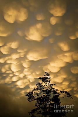 Photograph - Nova Scotia Sky by Nora Blansett
