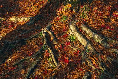 Oak Tree Roots And Pine Needles Print by Raymond Gehman