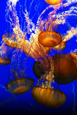 Ocean Jellyfish Print by Anthony Citro