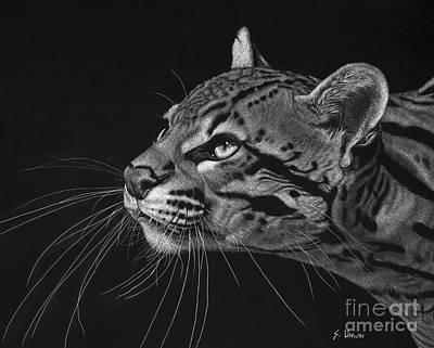 Scratchboard Drawing - Ocelot by Sheryl Unwin