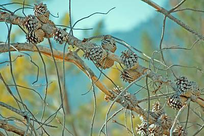 October Pine Print by Bonnie Bruno