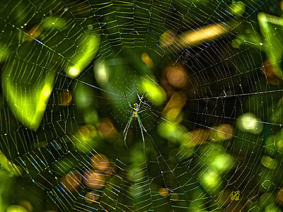 Photograph - Oh The Web We Weave by Barbara Middleton