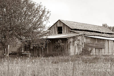 Old Barn In Sepia  Print by Connie Fox