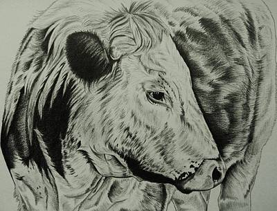 Steer Drawing - Old English Longhorn Study by Lucy Deane