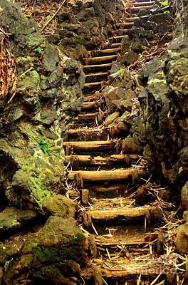 Old Forest Steps Print by Dean Harte
