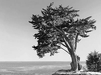 Old Growth Print by Paul Topp