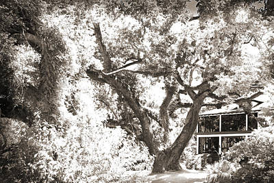 Old Oak Tree Print by Barry Jones