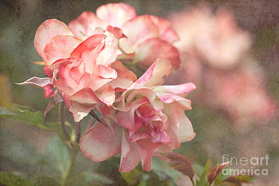 Texture Photograph - Old Roses by Carole Lloyd