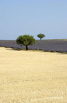 Olive Trees. Provence Print by Bernard Jaubert