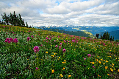 Olympics Photograph - Olympic Mountains Wildflowers by Dan Mihai
