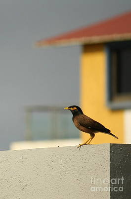 Vishakha Photograph - On A Lookout by Vishakha Bhagat