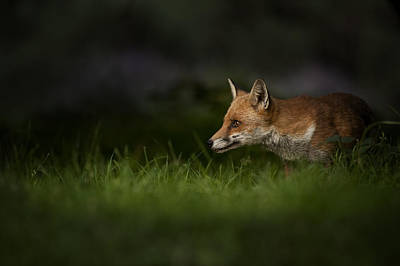 Wildlife Photograph - On High Alert by Andy Astbury