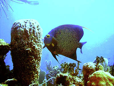 On The Reef Print by Barry Jones