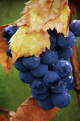 On The Vine Print by Dale Kincaid