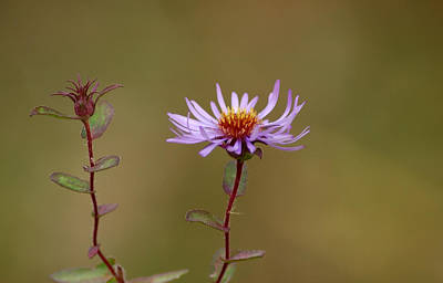 Floral Photograph - One Blossom Left by LeeAnn McLaneGoetz McLaneGoetzStudioLLCcom
